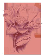 ggm-lotus
